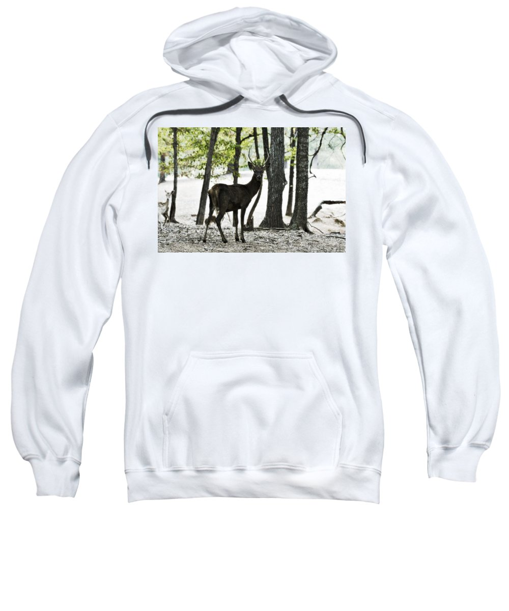 Red Deer Sweatshirt featuring the photograph Deer In The Woods by Douglas Barnard
