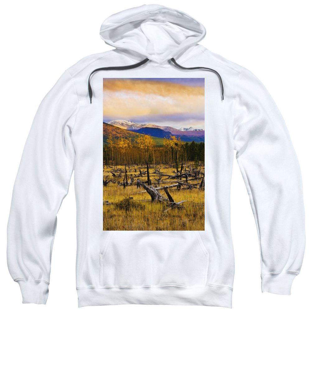 Bare Sweatshirt featuring the photograph Destruction And Re-growth After Forest by Yves Marcoux
