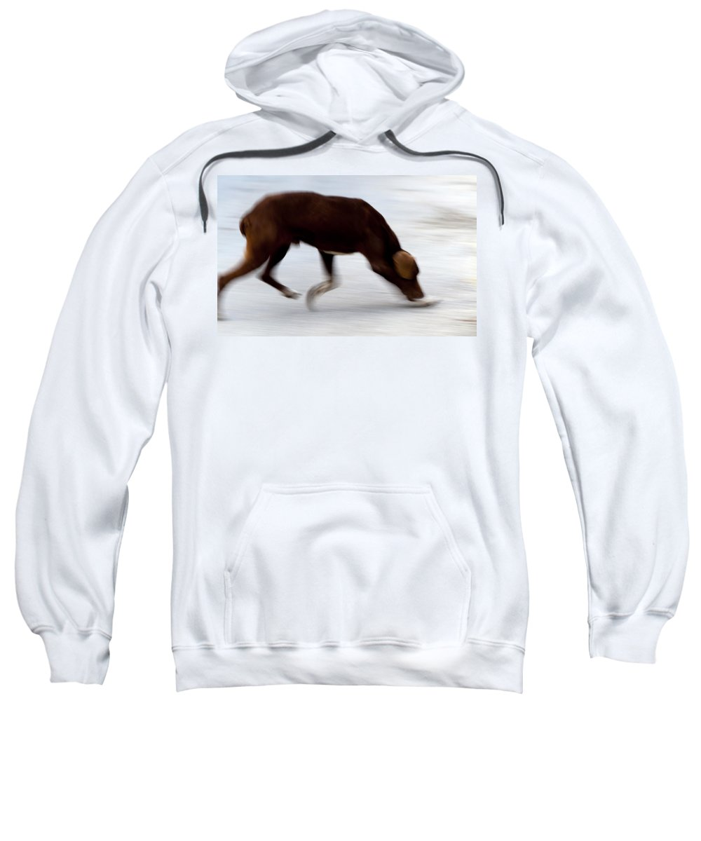 Dog Sweatshirt featuring the photograph Dog In Motion by Focus Fotos