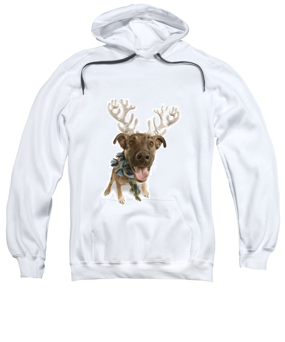 Animal Sweatshirt featuring the photograph Dog With Antlers by Don Hammond