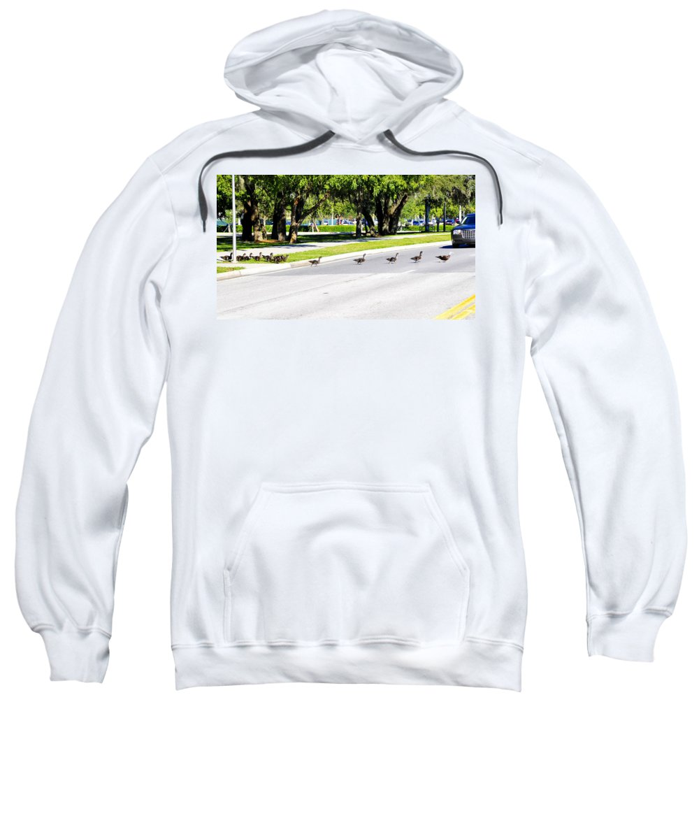 Fine Art Photography Sweatshirt featuring the photograph Duck Crossing by David Lee Thompson
