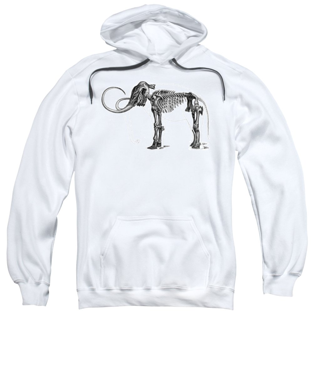Prehistory Sweatshirt featuring the photograph Elephas, Extant Cenozoic Mammal by Science Source