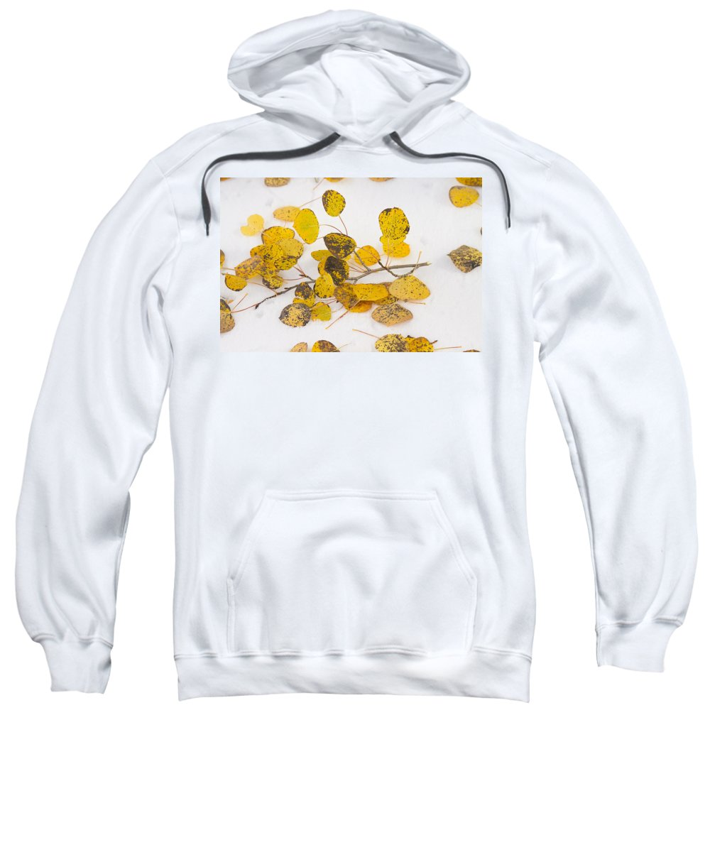 Snow Sweatshirt featuring the photograph Fallen Autumn Aspen Leaves by James BO Insogna