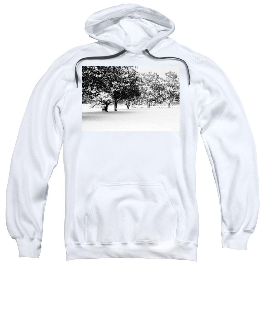 Nature Sweatshirt featuring the photograph First Snow by Hannah Breidenbach