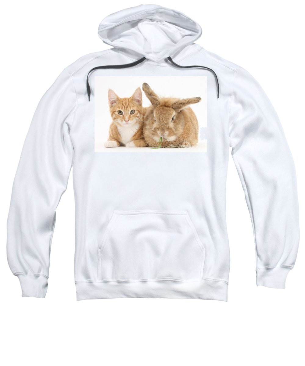 Nature Sweatshirt featuring the photograph Ginger Kitten With Sandy Lionhead-cross by Mark Taylor