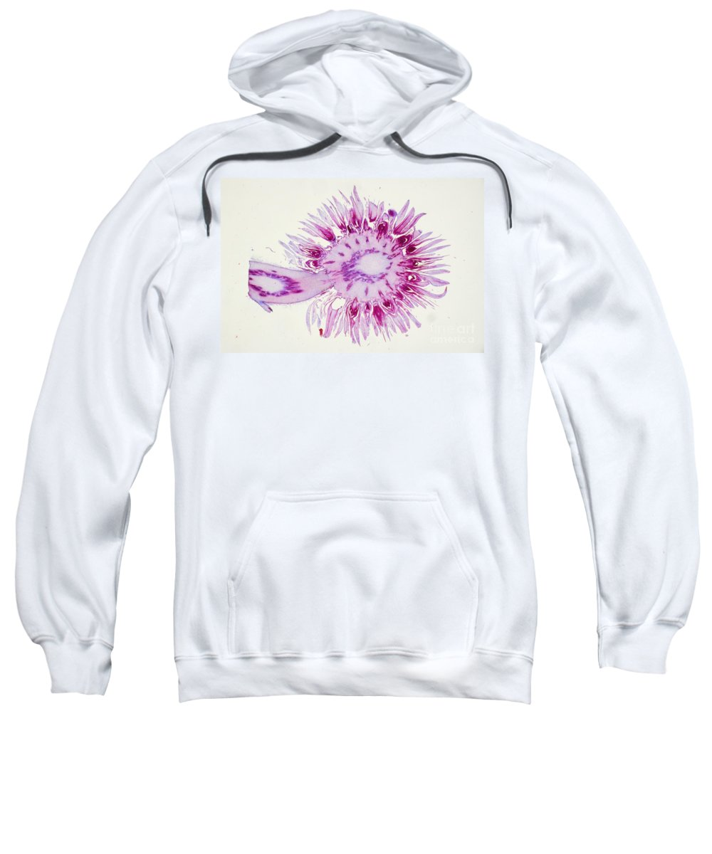 Science Sweatshirt featuring the photograph Globe Thistle Flower Lm by M. I. Walker