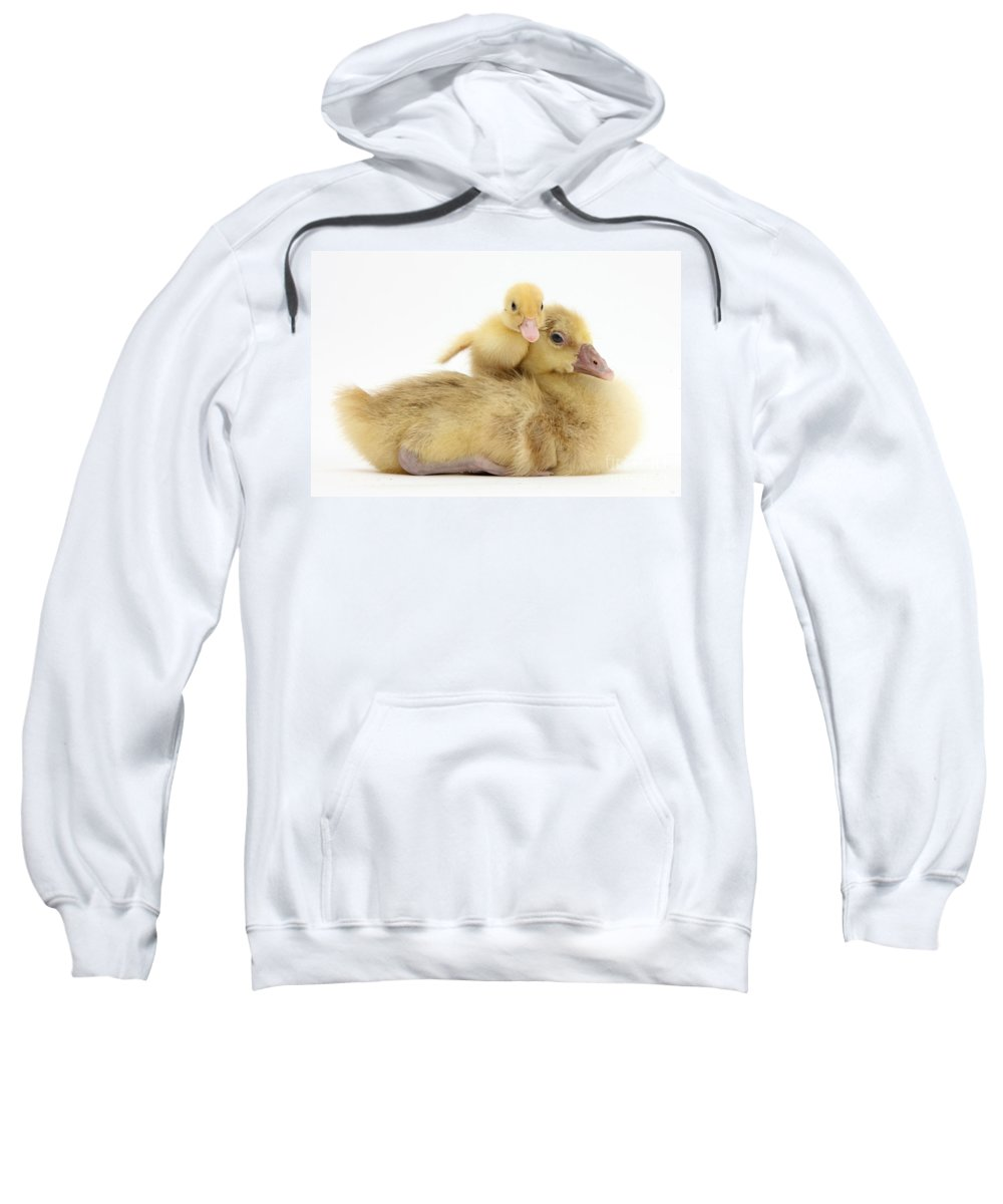 Nature Sweatshirt featuring the photograph Gosling And Duckling by Mark Taylor