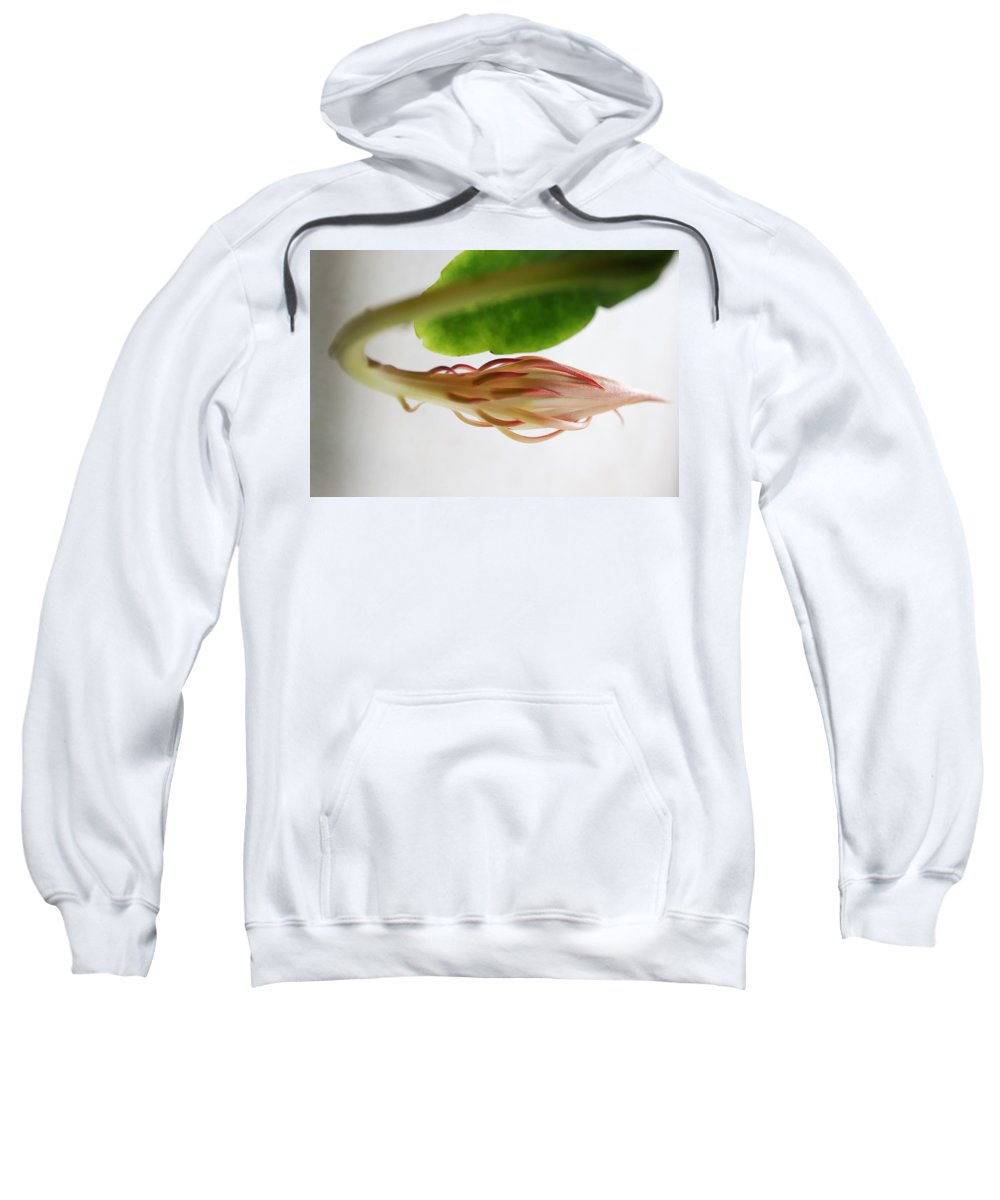 Nature Sweatshirt featuring the photograph Great Expectations by Susan Capuano