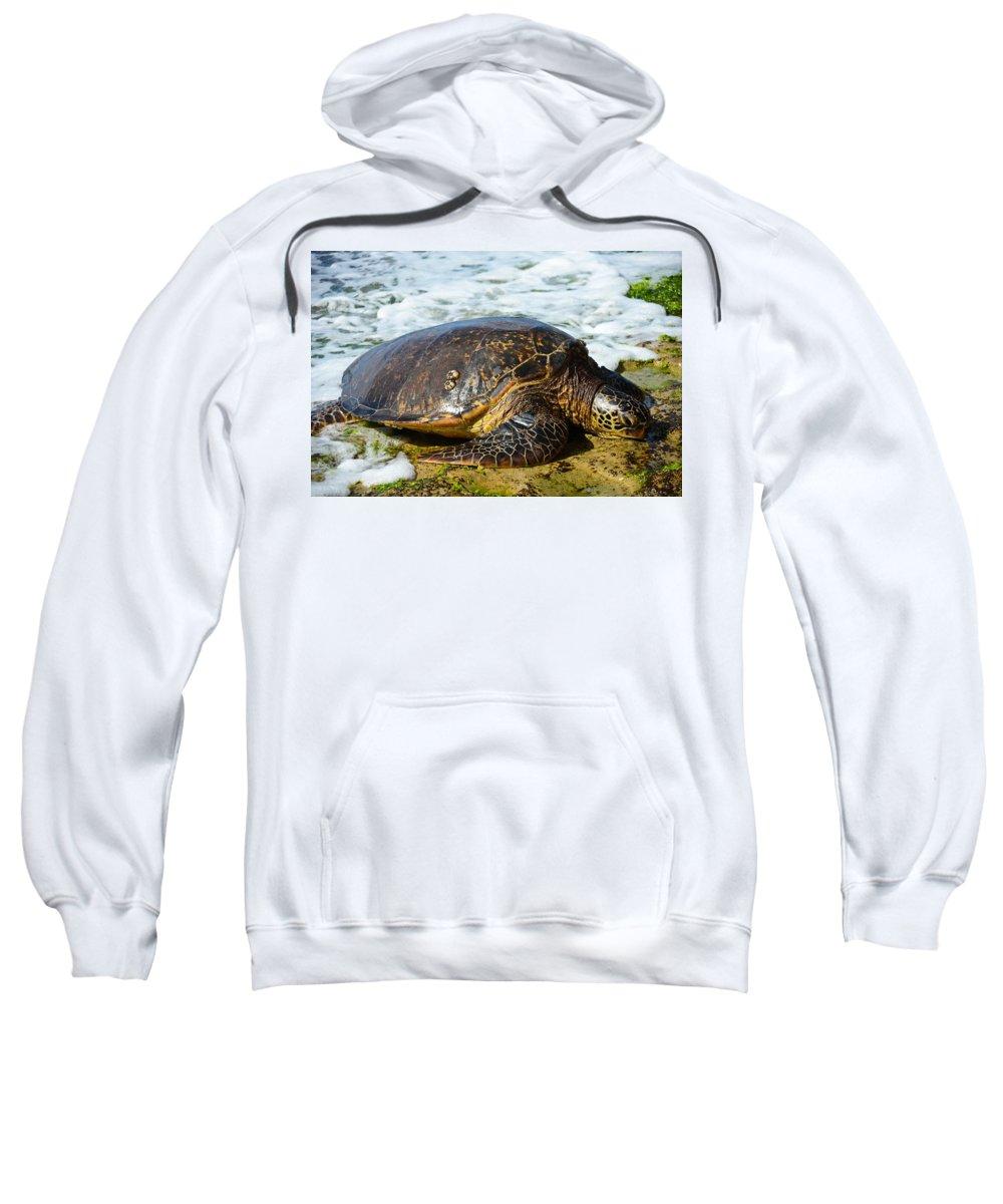 Sea Turtle Sweatshirt featuring the photograph Green Sea Turtle Of Hawaii by Shirley Tinkham