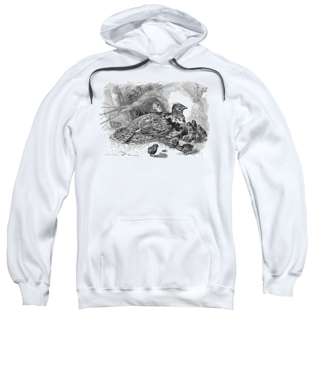 19th Century Sweatshirt featuring the photograph Grouse And Young by Granger