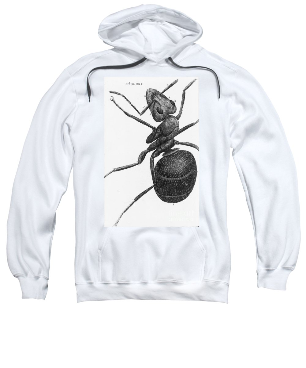 1665 Sweatshirt featuring the photograph Hooke: Ant, 1665 by Granger
