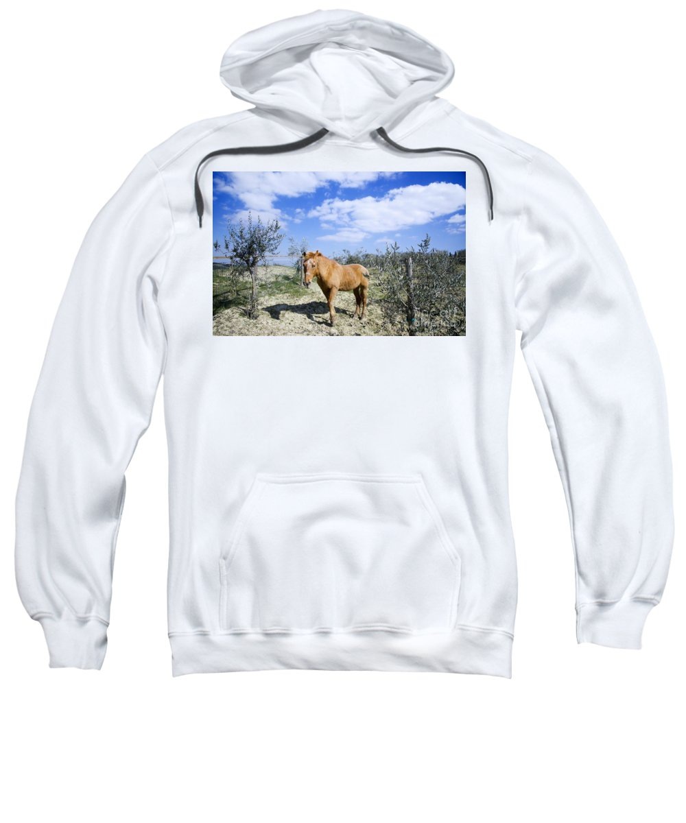 Horse Sweatshirt featuring the photograph Horse by Mats Silvan