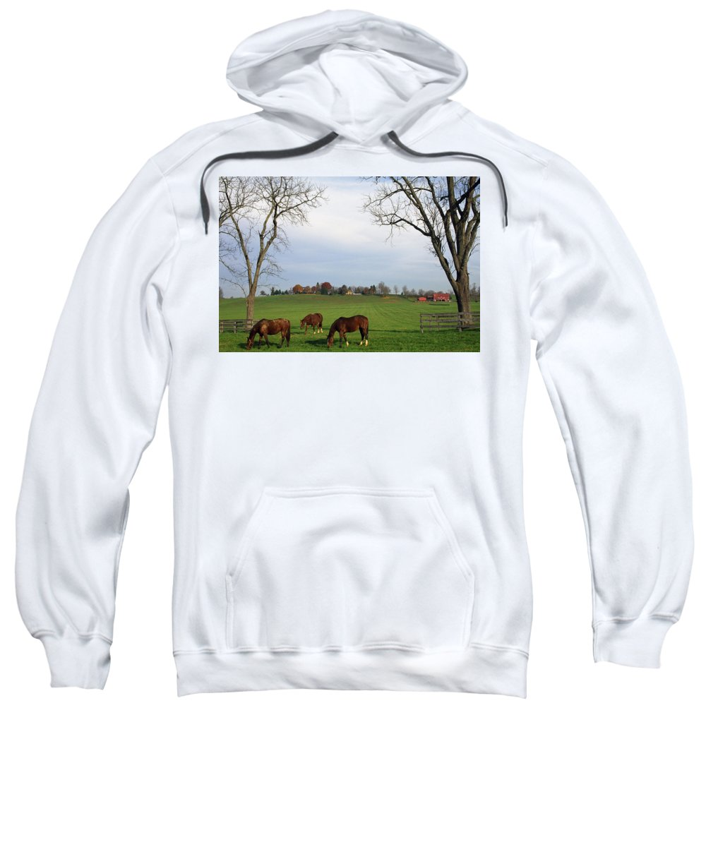 Field Sweatshirt featuring the photograph Horses Grazing by Natural Selection Tony Sweet
