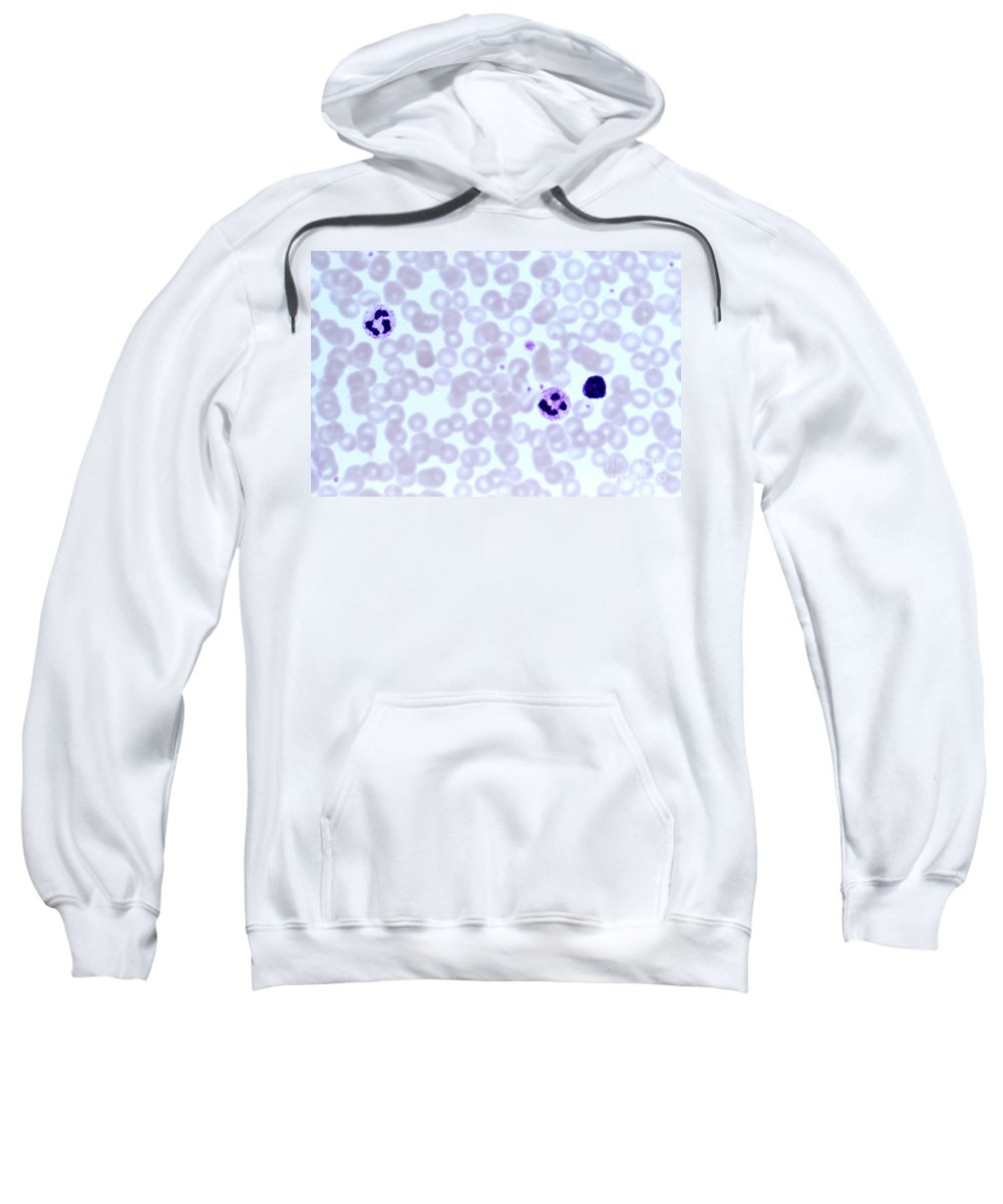 Light Microscopy Sweatshirt featuring the photograph Human Blood Smear by M. I. Walker