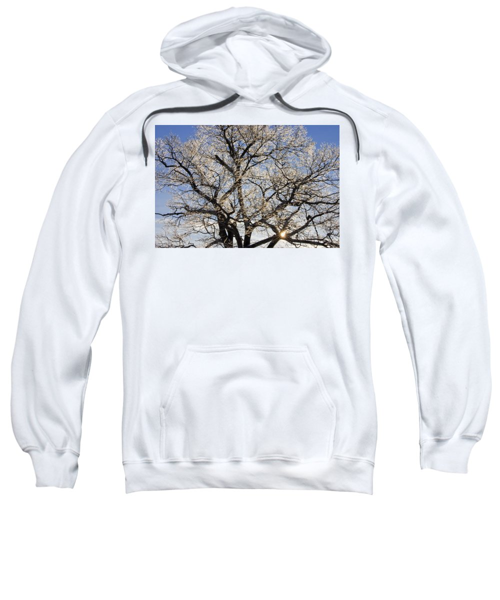 Ice Sweatshirt featuring the photograph Ice Covered Tree At Sunrise by Keith Webber Jr