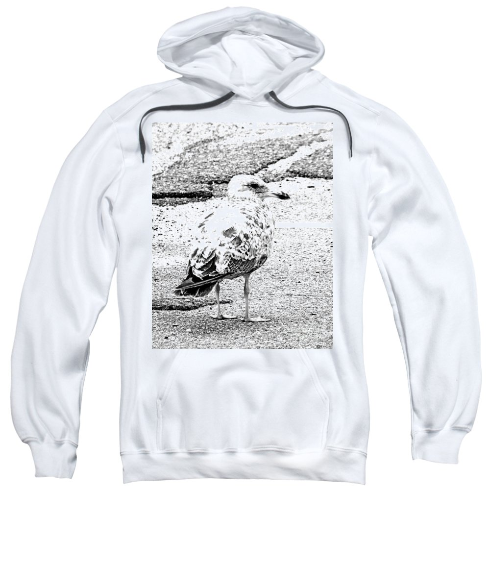Seagull Sweatshirt featuring the photograph Jeffrey Cleverly Disguised As A Road by Lizi Beard-Ward