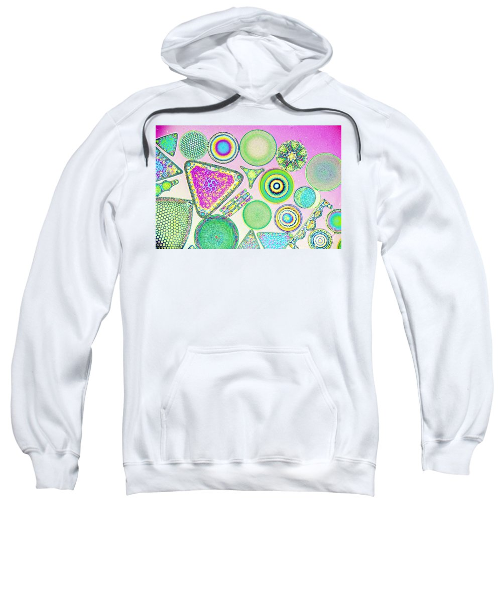 Micro Fossil Sweatshirt featuring the photograph Lm Of Fossilized Diatoms by M. I. Walker