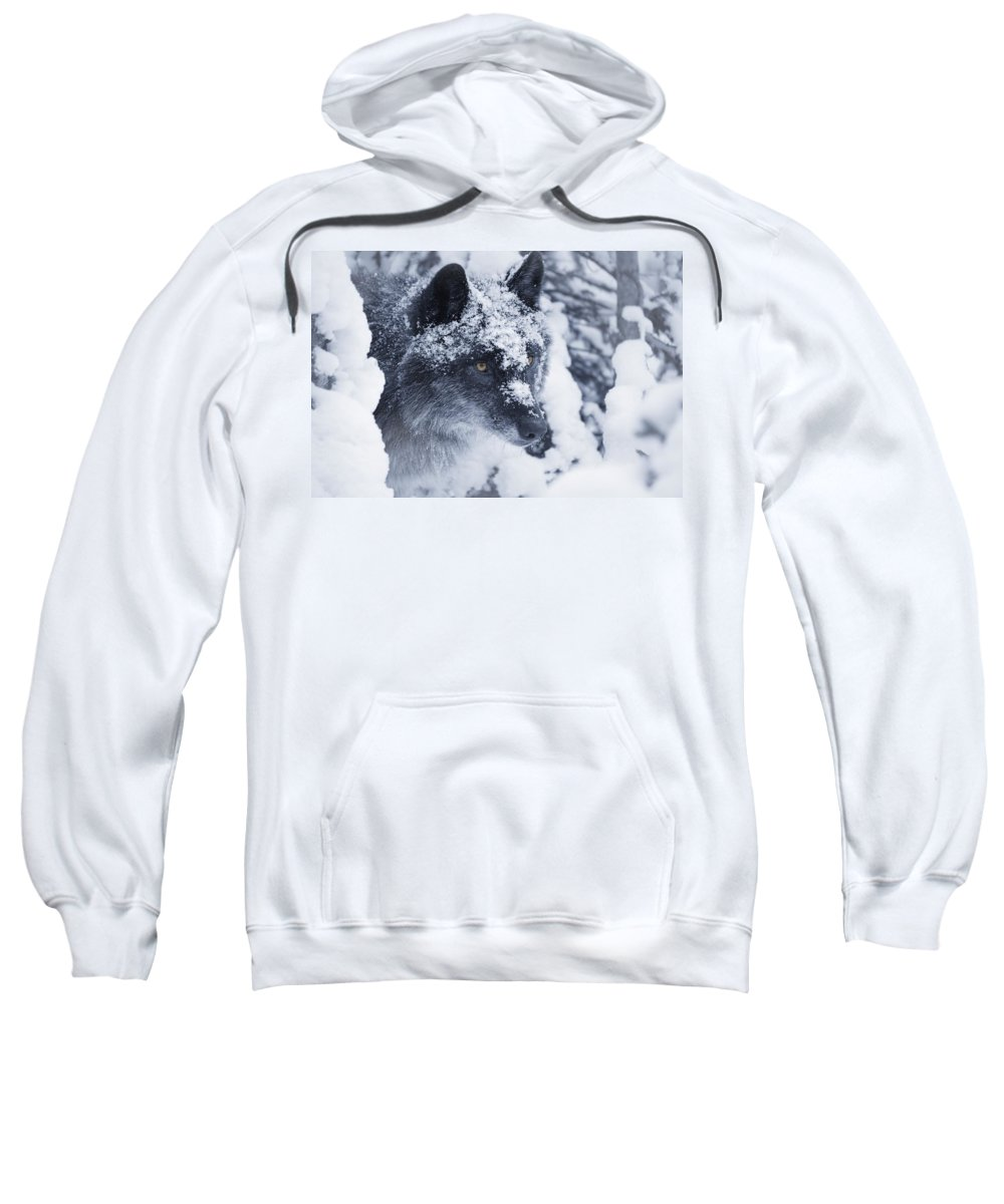 Horizontal Sweatshirt featuring the photograph Lone Wolf In Snow by Don Hammond