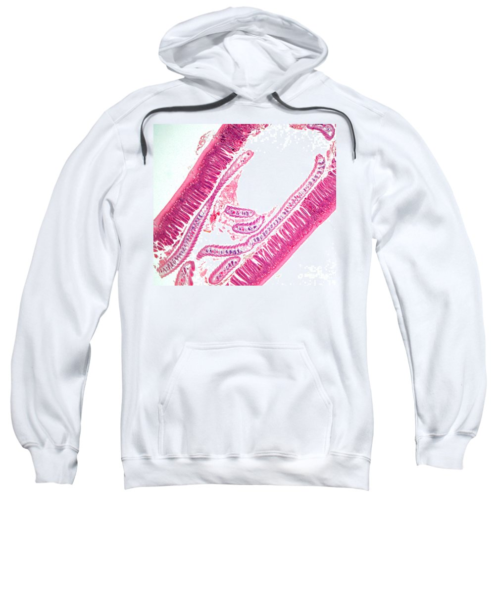 Light Microscopy Sweatshirt featuring the photograph Loxodes by M. I. Walker