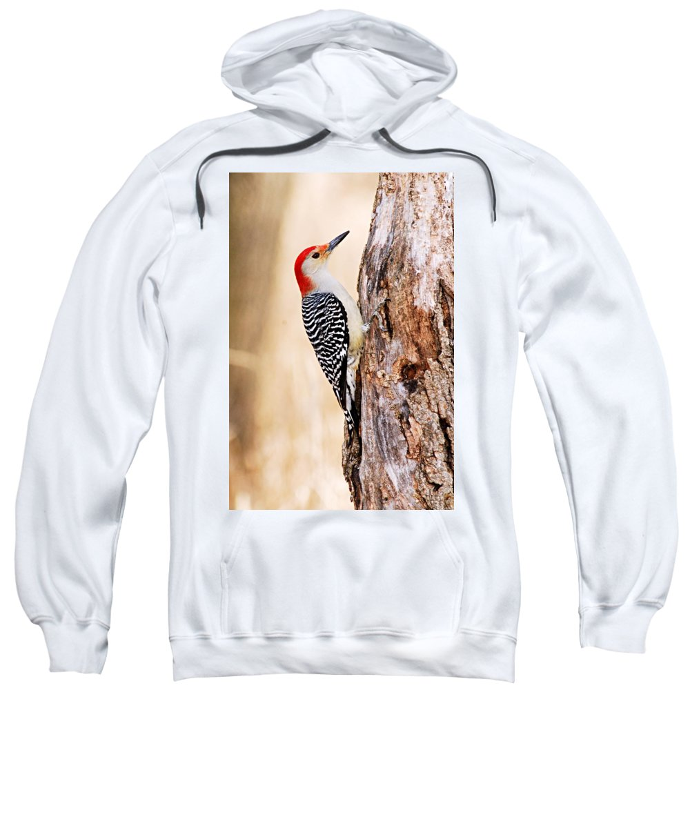 Photography Sweatshirt featuring the photograph Male Red-bellied Woodpecker by Larry Ricker