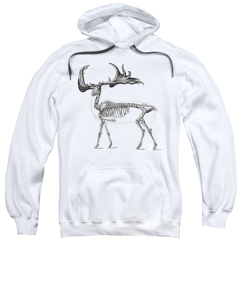 Prehistory Sweatshirt featuring the photograph Megaloceros, Cenozoic Mammal by Science Source