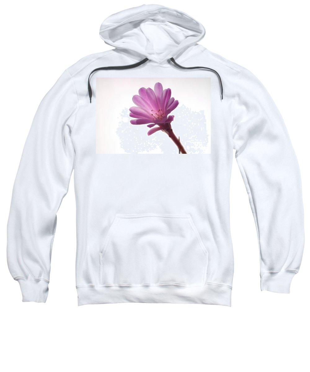 Cactoideae Sweatshirt featuring the photograph Notocactus Herderii Flower by Raul Gonzalez Perez