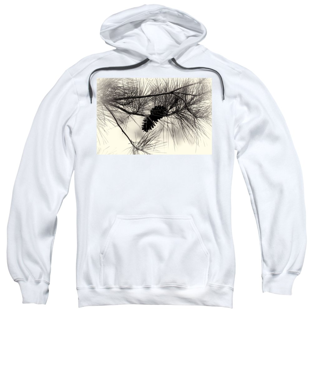 Pine Cones Sweatshirt featuring the photograph Pine Cones In The Treetops by Douglas Barnard