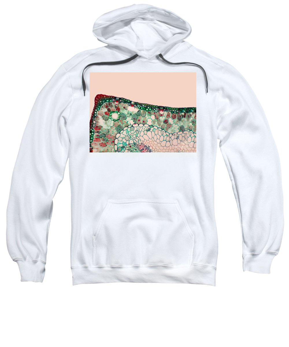 Science Sweatshirt featuring the photograph Pine Needle Light Micrograph by Gary DeLong and Photo Researchers