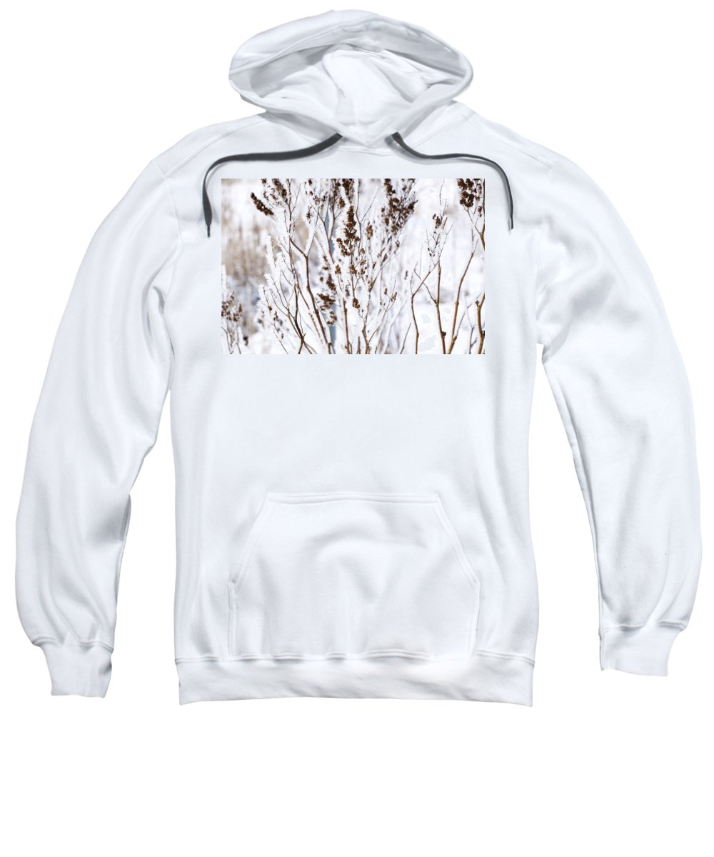 Fresh Snow Sweatshirt featuring the photograph Plants In Winter by David Chapman