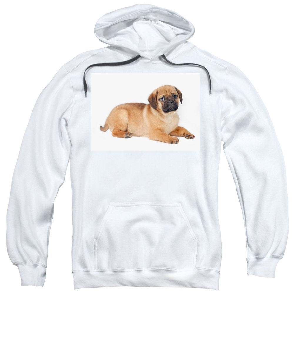 Copy Space Sweatshirt featuring the photograph Pug Dog by Leah Hammond