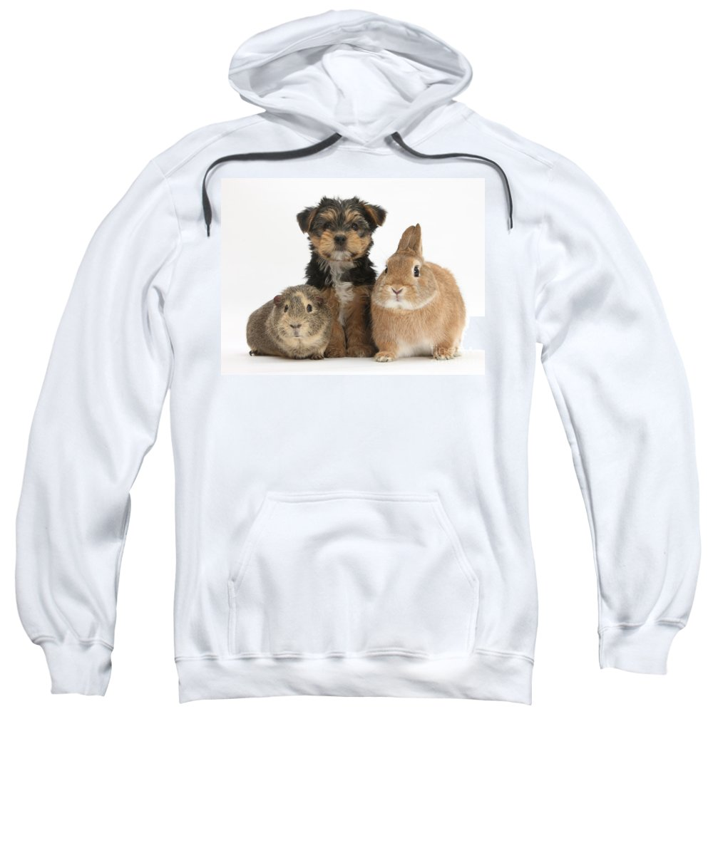 Nature Sweatshirt featuring the photograph Pup, Guinea Pig And Rabbit by Mark Taylor