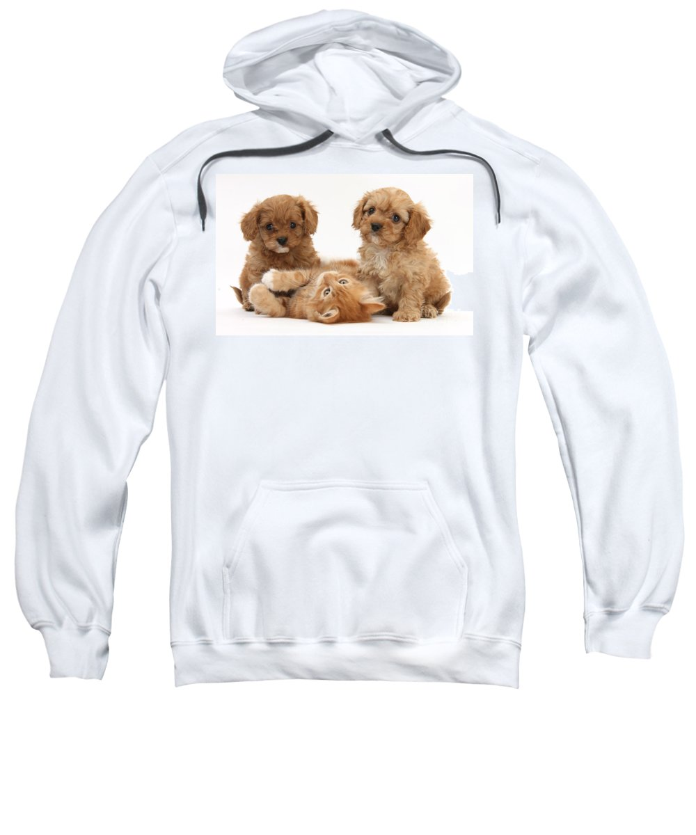 Animal Sweatshirt featuring the photograph Puppies And Kitten by Mark Taylor