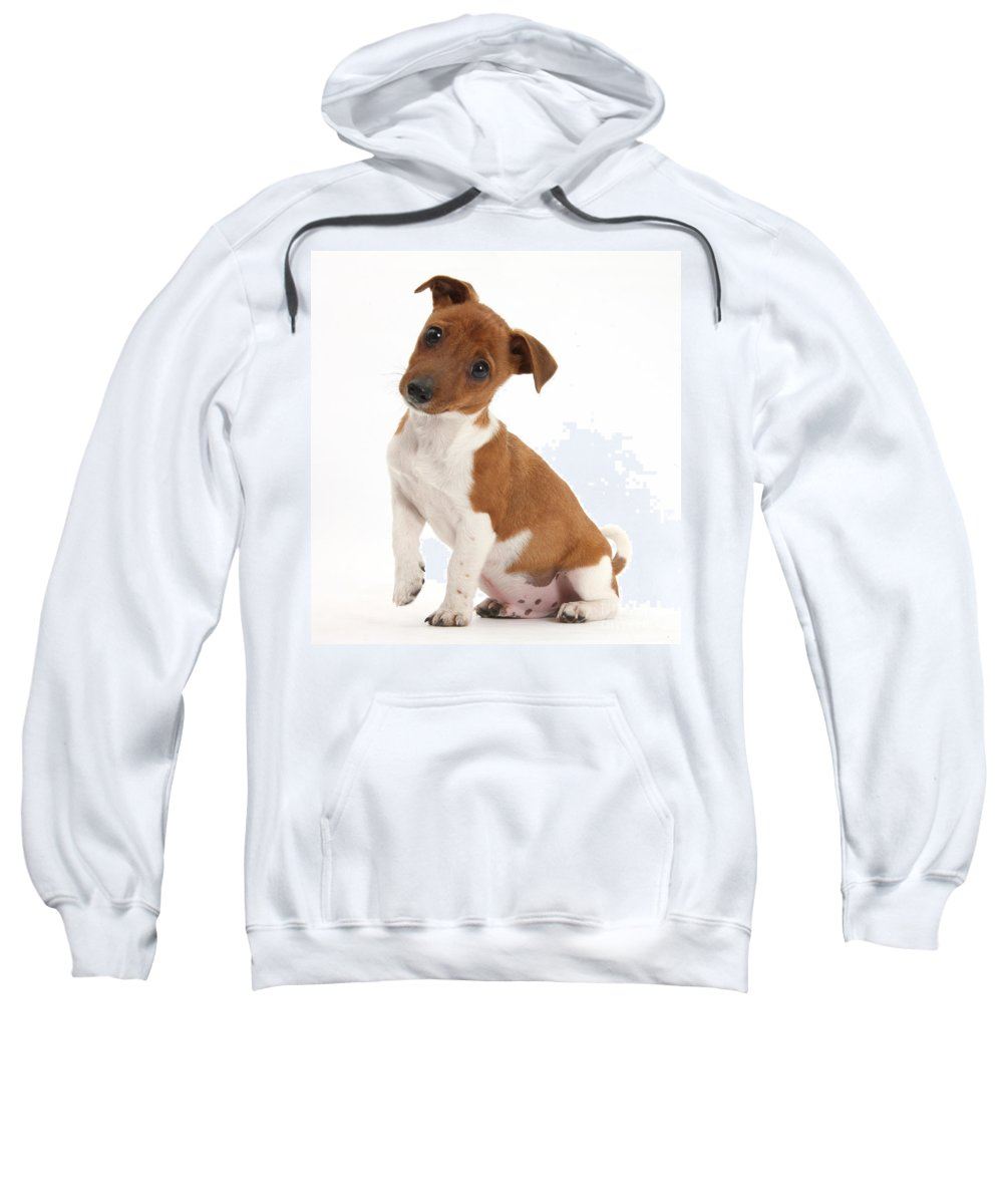 Nature Sweatshirt featuring the photograph Quizzical Puppy by Mark Taylor