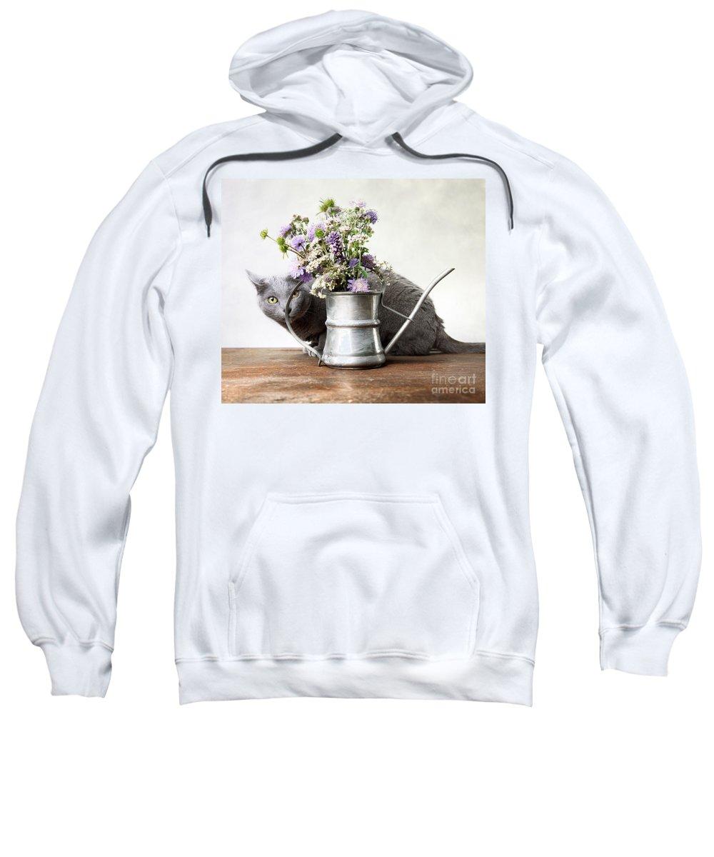 Cat Sweatshirt featuring the photograph Russian Blue 03 by Nailia Schwarz