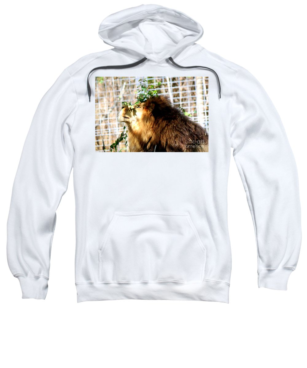Zoo Animals Sweatshirt featuring the photograph Scratching My Nose by Kathy White