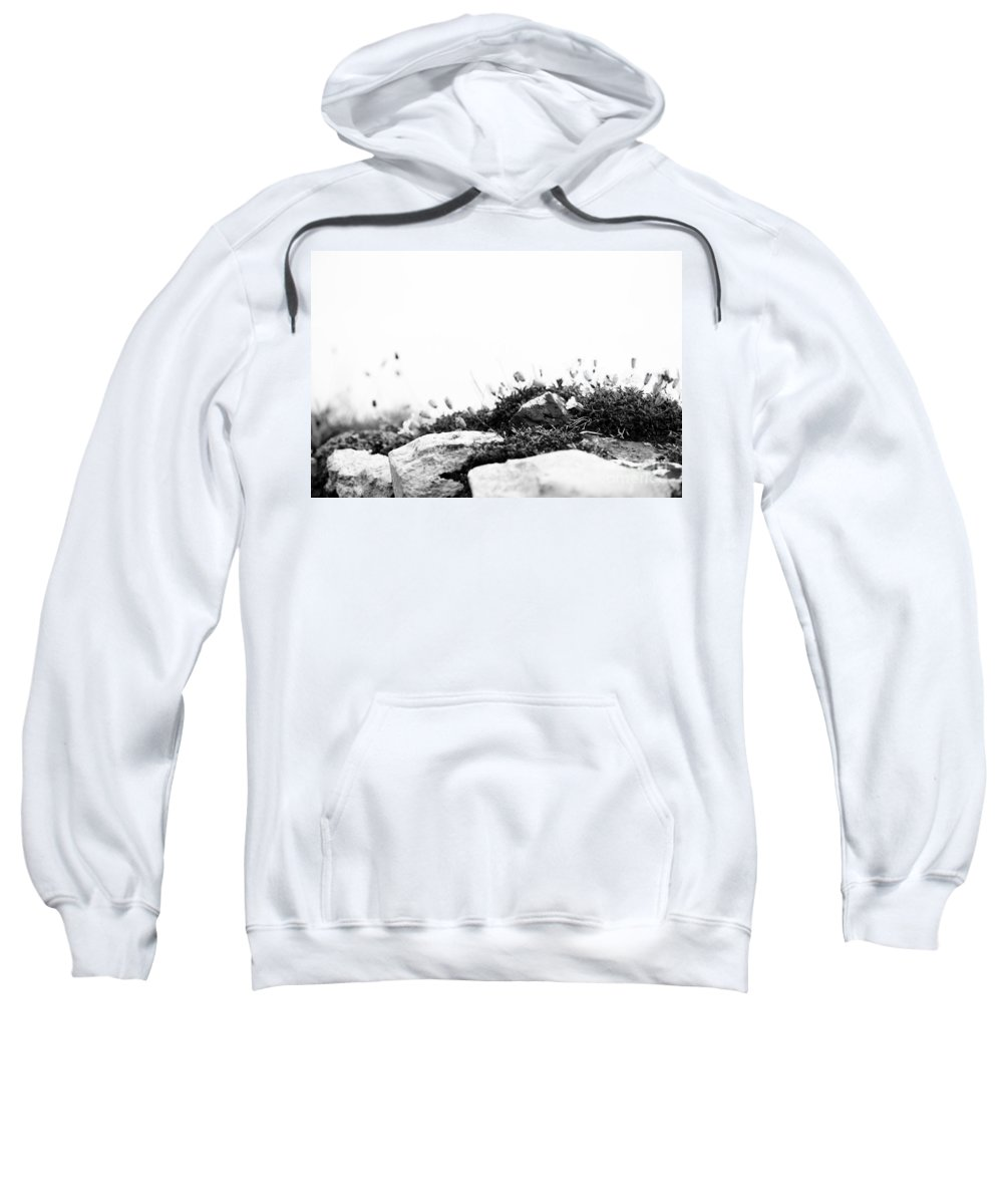 2012 Sweatshirt featuring the photograph Sea Campion Wall by Anne Gilbert