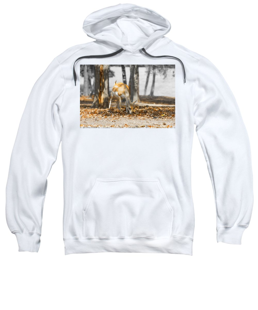 Grazing Impala Sweatshirt featuring the photograph Shaded Grazing by Douglas Barnard