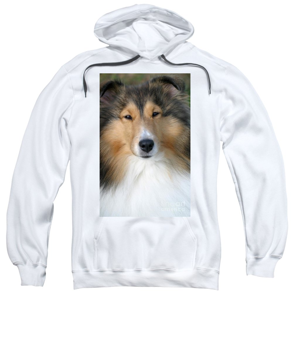 Dogs Sweatshirt featuring the photograph Sheltie by Living Color Photography Lorraine Lynch