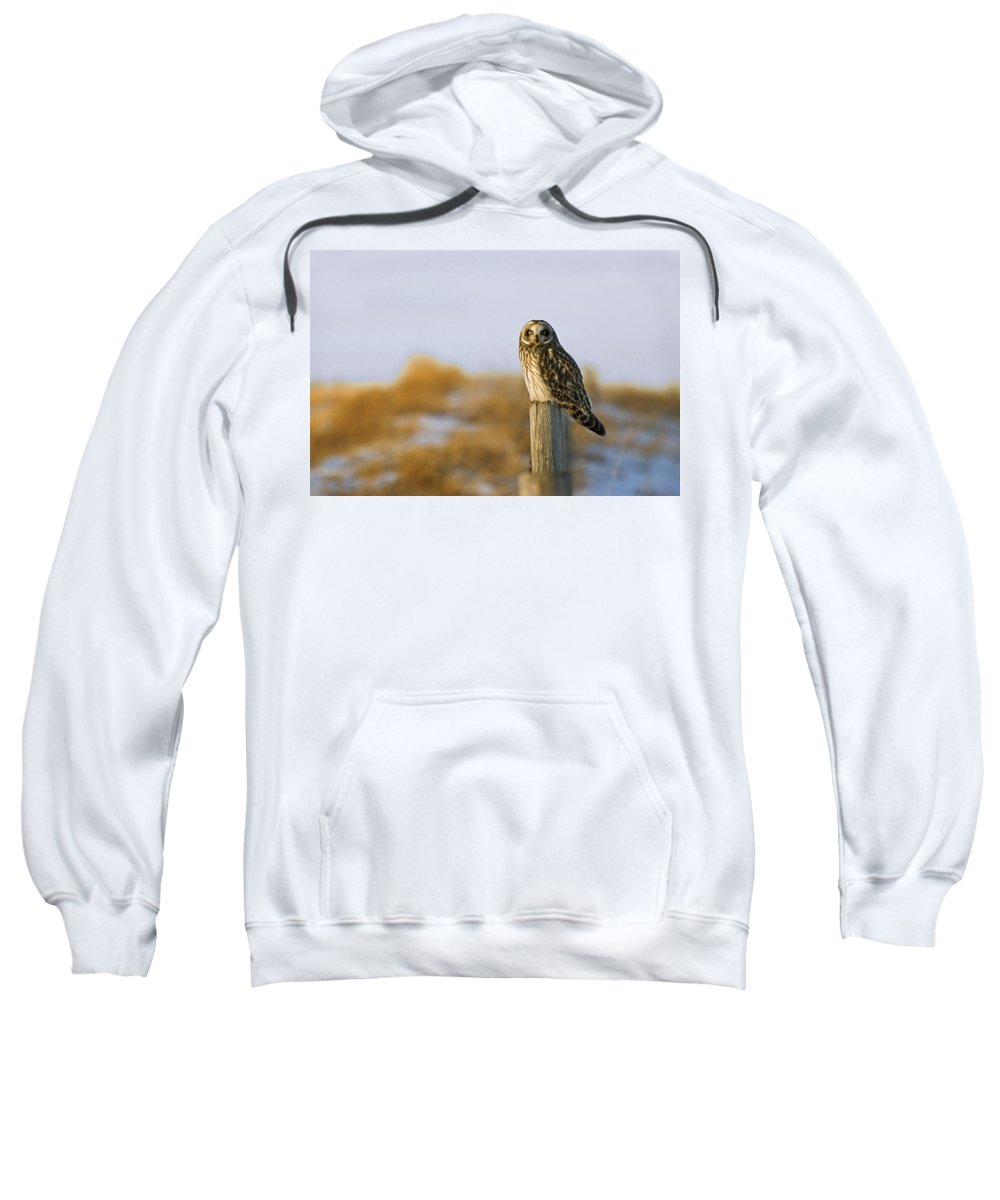 Carnivorous Sweatshirt featuring the photograph Short-eared Owl, Alberta, Canada by Philippe Widling