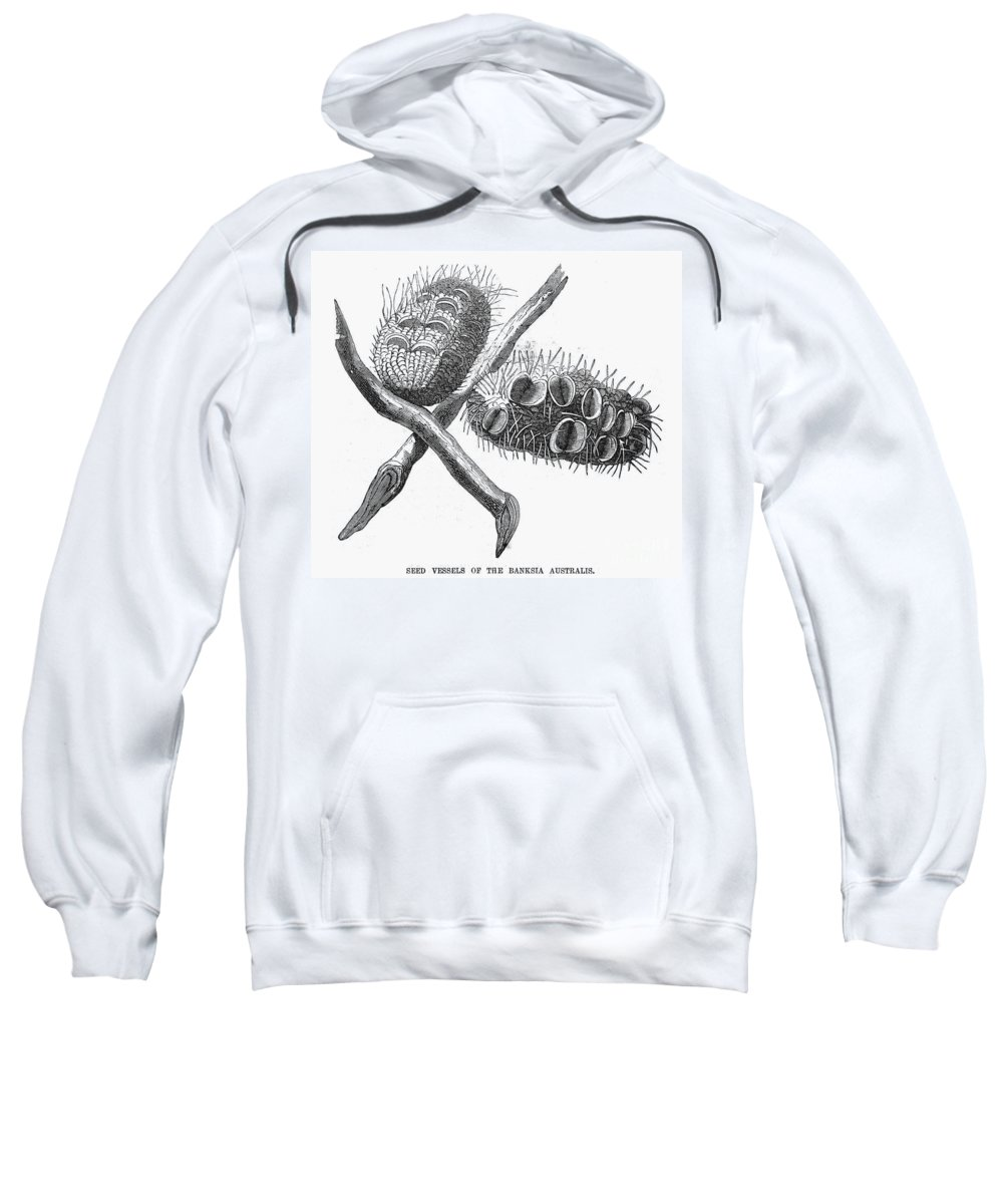19th Century Sweatshirt featuring the photograph Silver Banksia Seeds by Granger