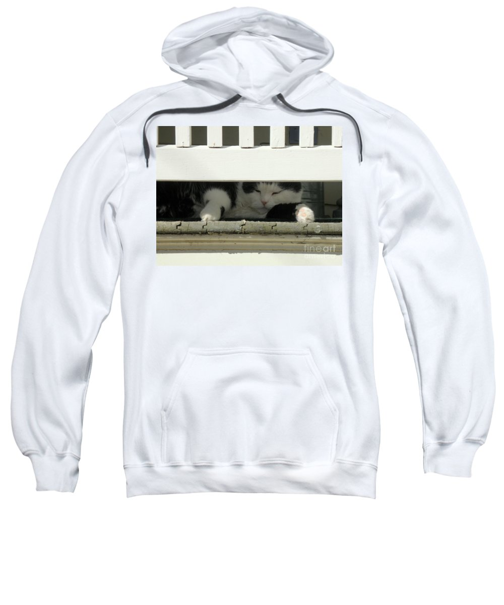 Cat Sweatshirt featuring the photograph Snoozing On The Porch by Lainie Wrightson