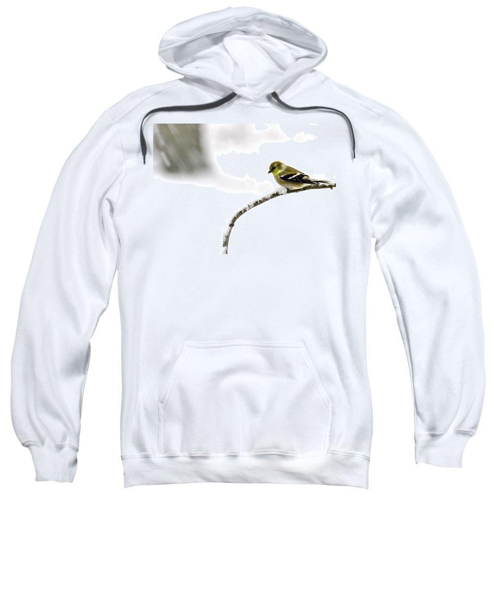 Snow Sweatshirt featuring the photograph Snow Bird In The Storm by LeeAnn McLaneGoetz McLaneGoetzStudioLLCcom