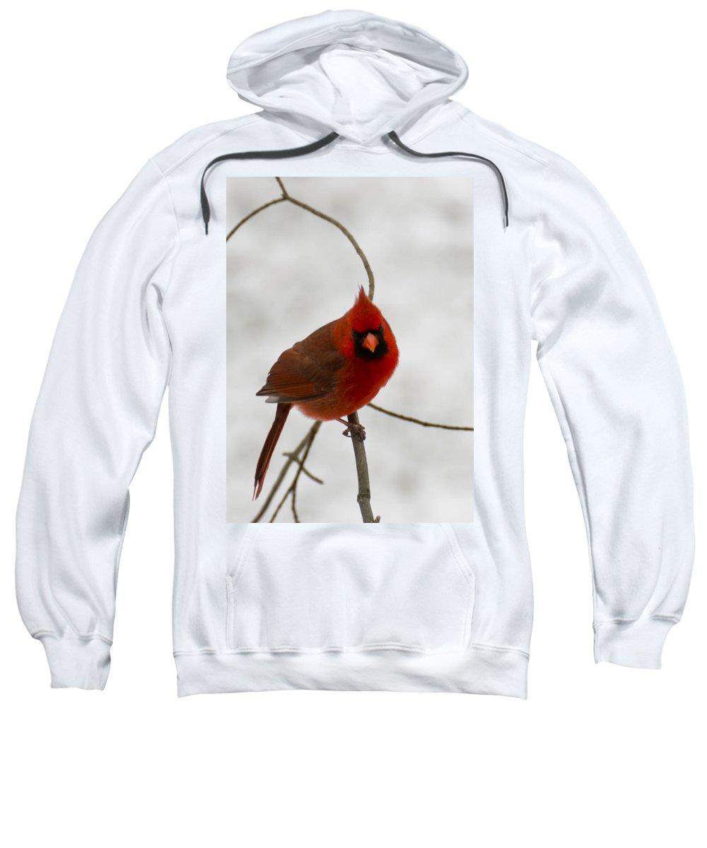 Usa Sweatshirt featuring the photograph Snow Cardinal by LeeAnn McLaneGoetz McLaneGoetzStudioLLCcom