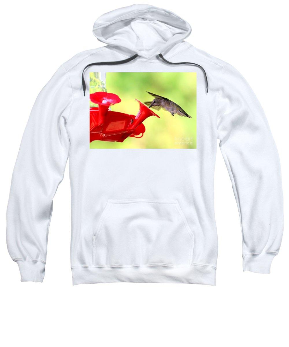 Hummingbird Sweatshirt featuring the photograph Summer Fun Hummingbird by Carol Groenen