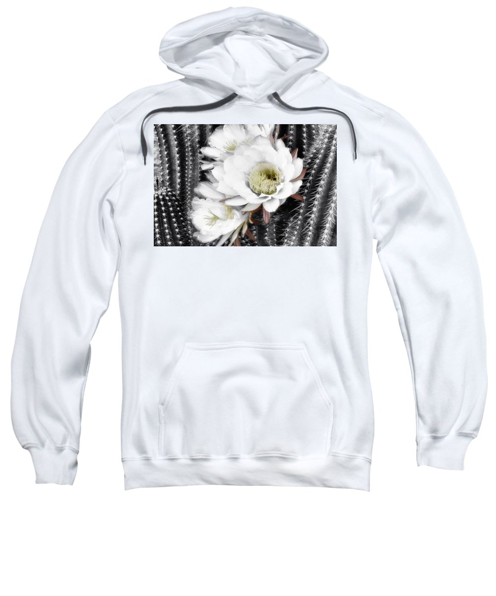 Torch Cactus Sweatshirt featuring the photograph Triple Torch Cactus by Linda Dunn