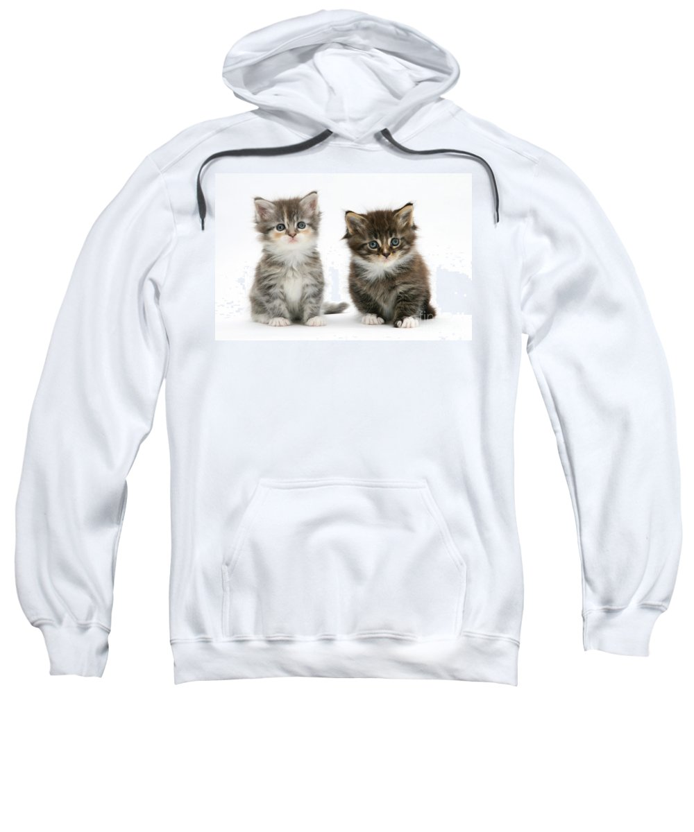 Nature Sweatshirt featuring the photograph Two Tabby Kittens by Mark Taylor