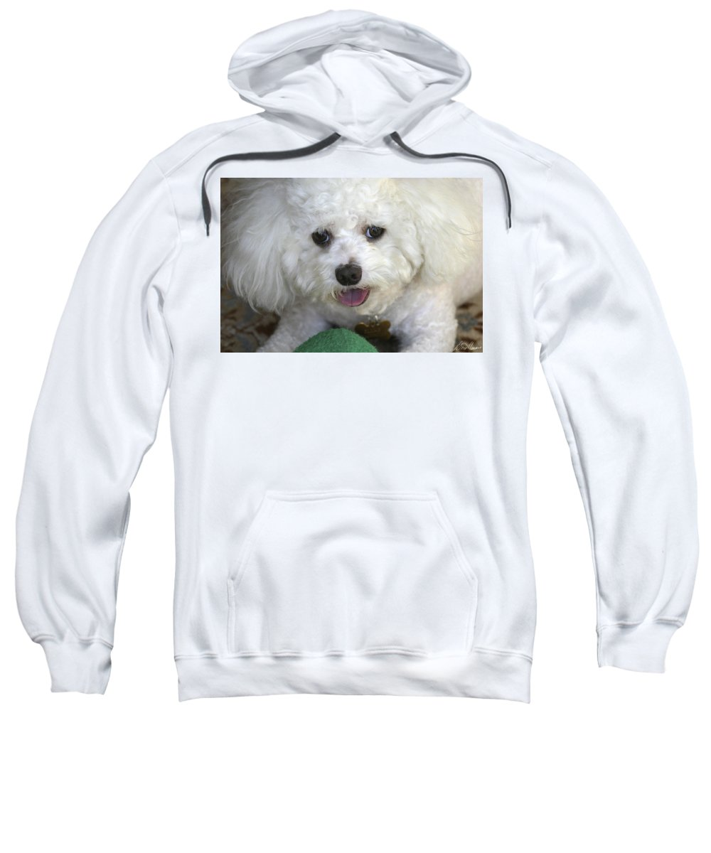 Dog Sweatshirt featuring the photograph Wanna Play Ball? by Diana Haronis