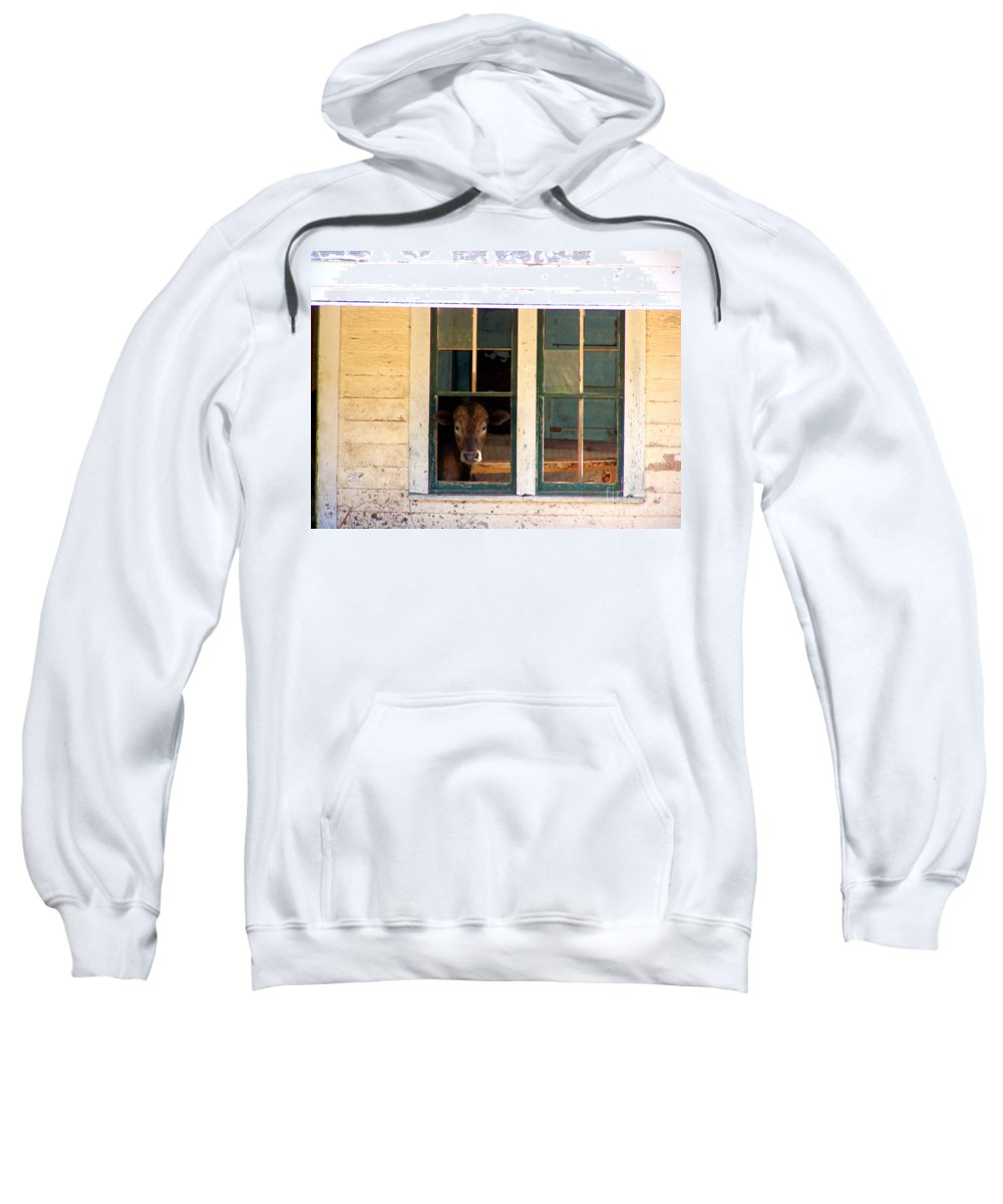 Cow Sweatshirt featuring the photograph What Is For Dinner? by Kathy White