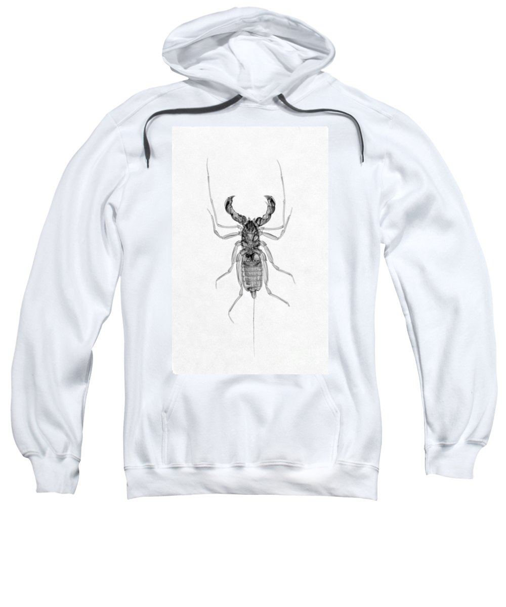X-ray Sweatshirt featuring the photograph Whipscorpion X-ray by Ted Kinsman