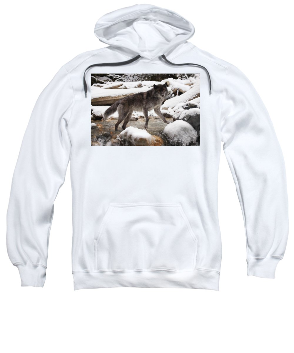 Horizontal Sweatshirt featuring the photograph Wolf by Don Hammond
